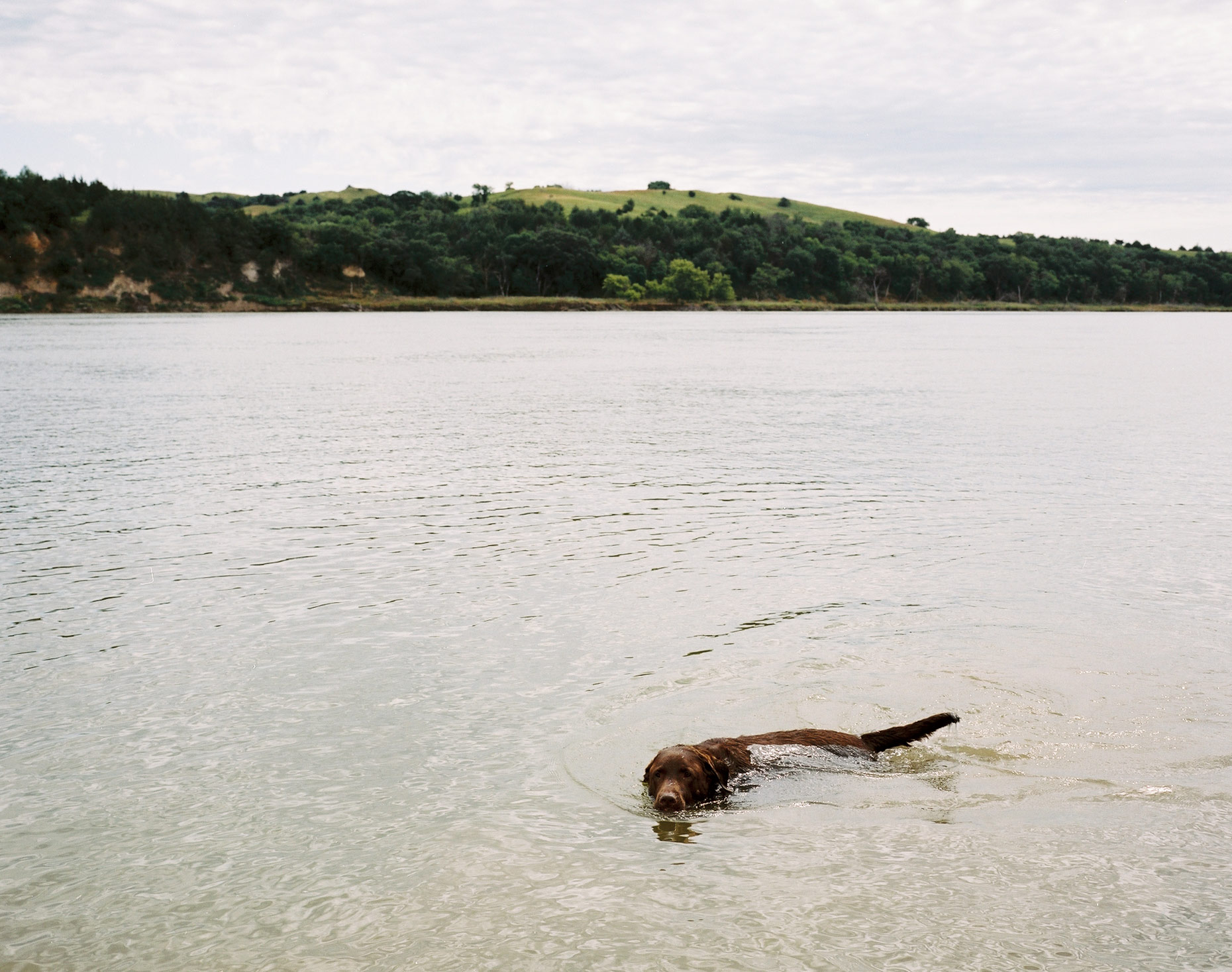 dogswimming